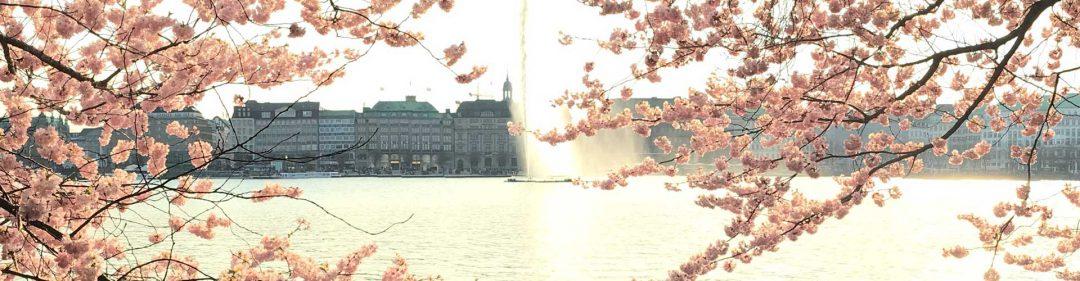 Alster Kirschblüte